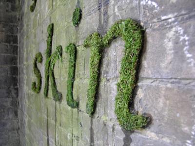 Moss Graffiti Blendbureauxblend Bureaux