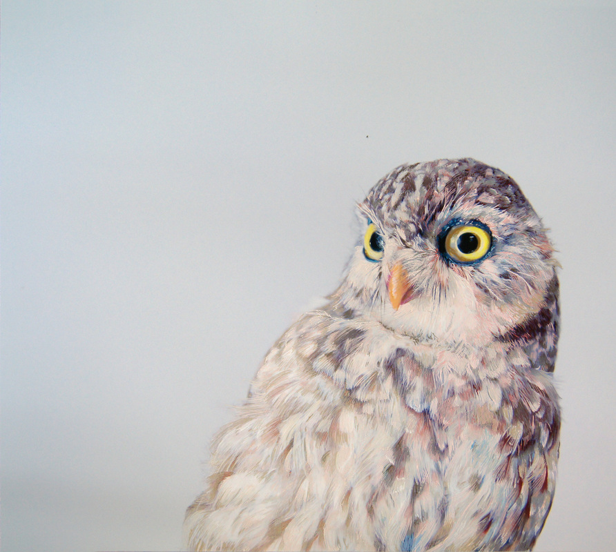 Owl Drawing Color Owl Drawings Using Pencils